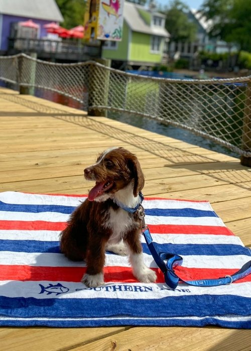 Dog on a red, white, and blue towel
