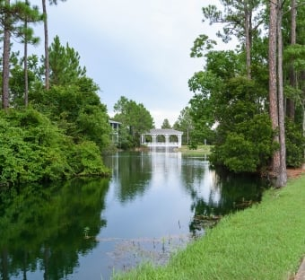 the lush green trees at the Sandestin Golf and Beach Resort golf club, Burnt Pine